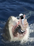 Man Messaging for Help from Shark's Mouth