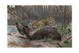 Jaguar by Alfred Edmund Brehm