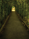 Tunnel of Shrub