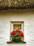Floral Window I