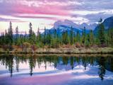 Purple Sky Treeline