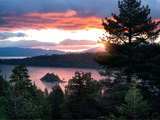 Sunset Forrest
