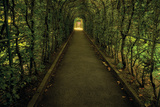 Tunnel of Shrub II
