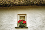Floral Window II