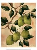 Italian Harvest  Limes