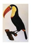 Histoire Naturelle Des Oiseaux De Paradis Et Des Rolliers