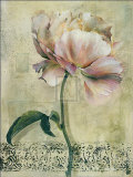 Floral Blush II