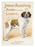 Austellung Von Hunden