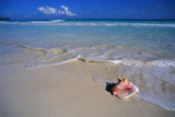 Conch Shell on Quiet Beach