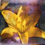 Yellow Lily and Text
