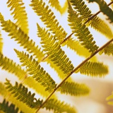 Close-up of a Fern Frond