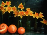 Arrangement of Daffodils and Oranges