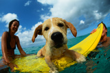 Puppy Riding on Surfboard