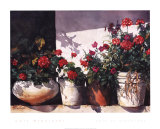 Pots of Geraniums