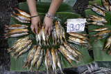 A Dried Fish Vendor Sorts Her Fish at Her Stall in a Street Market in Manila