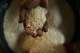 A Worker Shows His Rice at a Rice Mill in the Karawang Regency in West Java