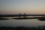 Men Walk with Camels During Sunset by the Sea in Karachi