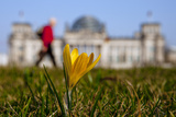A Flower Blossoms Near Reichstag on Sunny Spring Day in Berlin