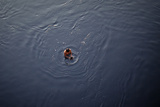 A Man Looks for Coins Thrown by Devotees in the Arabian Sea  in Mumbai