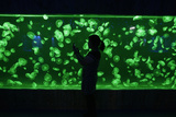 A Visitor Takes a Picture of a Jellyfish with Her Mobile Phone under the Green Lights