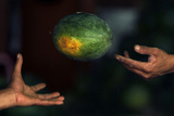 An Indonesian Fruit Seller Catches a Watermelon at a Jakarta Fruit Market