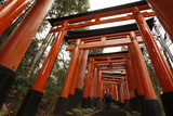 A Man Walks Through Torii Gates at Fushimi Inari Taisha in Kyoto  Western Japan
