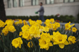 Flowers Bloom in a Street Planter Near Central Park During a Warm Day in New York