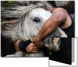 A Reveller Tries to Hold on to a Wild Horse During the -Rapa Das Bestas- Traditional Event