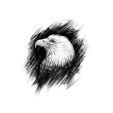 Eagle Realistic Graphic Drawing