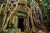 Ta Prohm at Angkor Wat  Cambodia