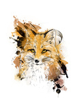 Fox Graphic Drawing