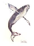 Humpback Whale21