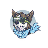 Dog-Pilot in Glasses and a Scarf Chihuahua