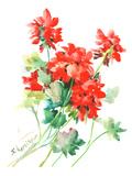 Geranium Red