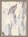 Sycamore Trunk Detail  Sedona  Arizona  USA