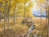Wooden fence and Aspen forest in autumn