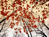 Bare Branches and Red Maple Leaves Growing Alongside the Highway