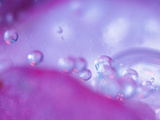Dew Drops on Flower Petal Abstract