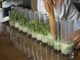 Row of Glasses on a Bar with Barman Preparing Mojito Cocktails  Habana Vieja  Havana  Cuba