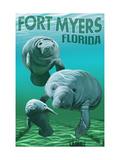 Manatees - Fort Myers  Florida
