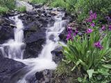 Waterfall and Wildflowers  Ouray  San Juan Mountains  Rocky Mountains  Colorado  USA