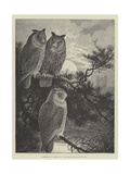 A Conference of Horned Owls  Three Heads are Better Than One