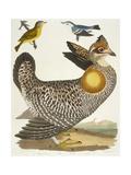 Birds 27 1 Pinnated Grous 2 Blue-Green Warbler 3 Nashville W  1808-1814
