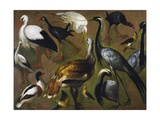 Study of Birds  by Alexandre-Francois Desportes (1661-1743)  France  18th Century
