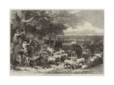The Defence of Paris  Cattle and Sheep in the Bois De Boulogne
