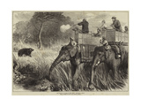 The Prince of Wales in the Terai  Shooting a Bear