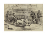 The Prince's Voyage Home from India  Life on Board the Serapis  Exercising the Gainees