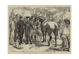 Buying Horses in Brittany for the French Army