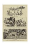 Round the World Yachting in the Ceylon  X  Ceylon