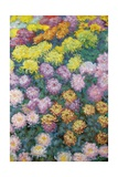 Massif De Chrysanthemes  1897